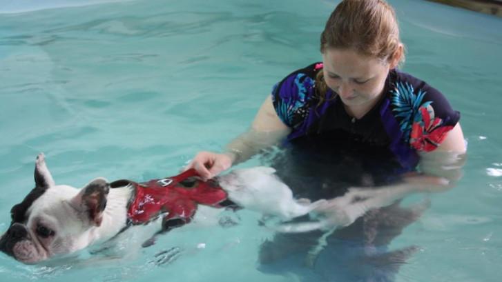 Moergestel krijgt een zwembad voor honden: hydrotherapeute naar het Rootven