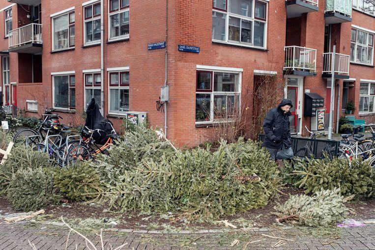 Kerstbomen in de Frans Halsstraat op de hoek van de Daniël Stalpertstraat. Beeld Jakob Van Vliet