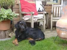Gevreesde hond Luna uit Nunspeet is spoorloos