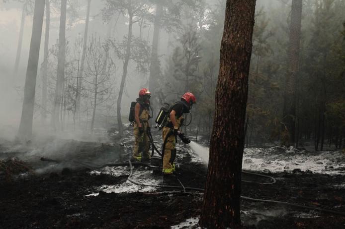 Brandweer blust de bosbrand in Maarheeze.
