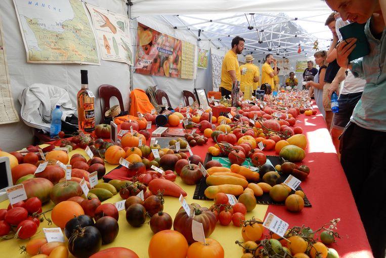 Brussels Tomato Festival Neder-Over-Heembeek
