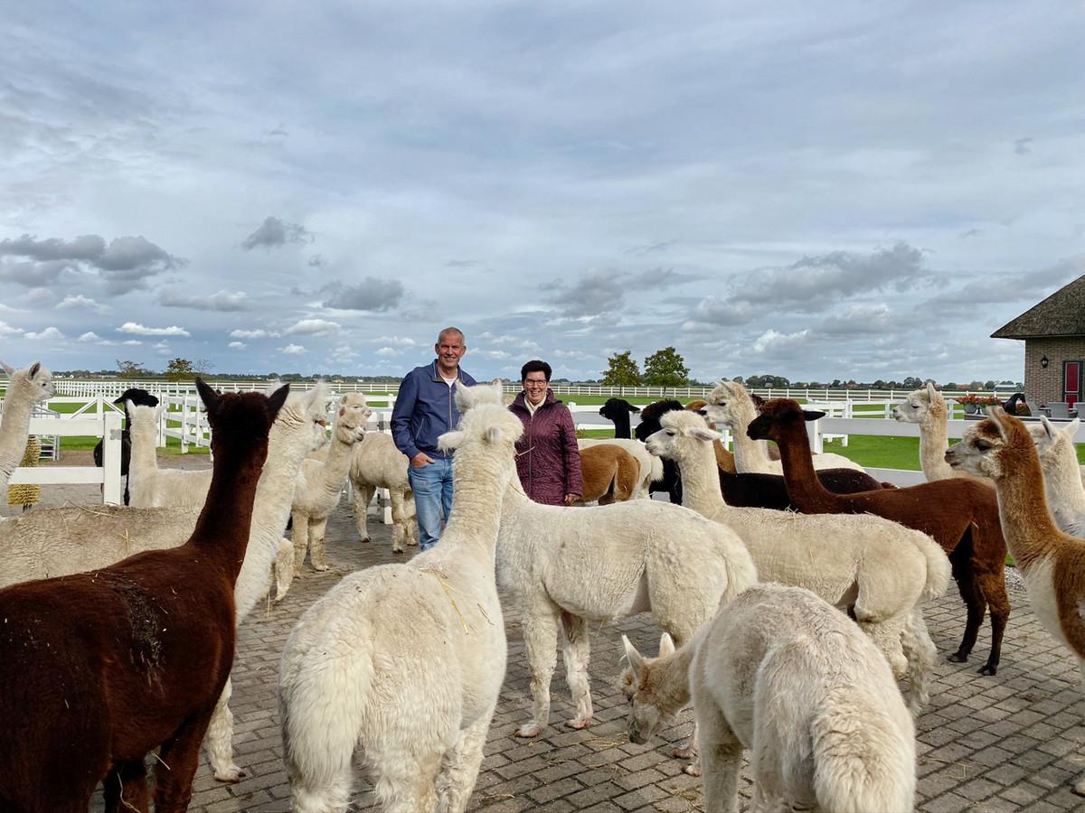 Jan en Ella Emaar: al zeventien jaar tussen hun alpaca's.