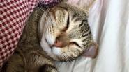 Uw kat houdt van u (en dat is wetenschappelijk bewezen)