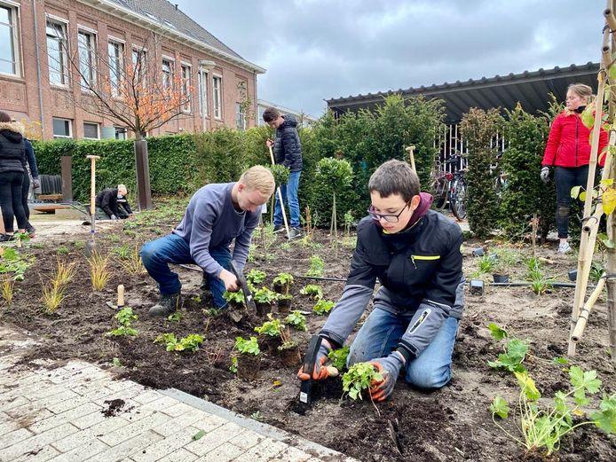 Leerlingen van Steenspil uit Halsteren helpen met de aanleg van een eetbare binnentuin bij de hotelschool aan de Meeussenstraat in Bergen op Zoom. En krijgen op die manier een kijkje in de keuken van het mbo.