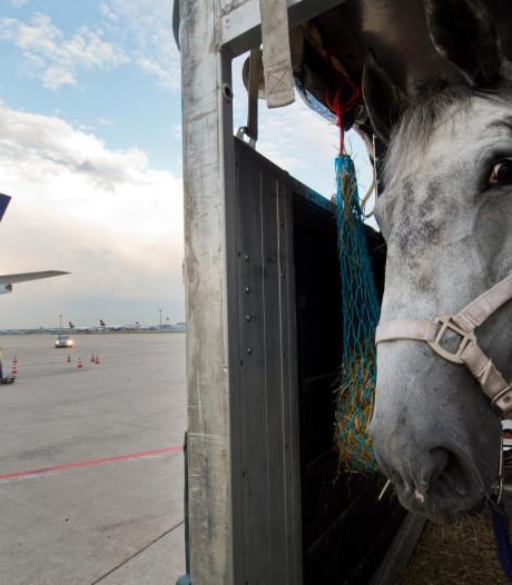 Speuren naar paardenfraude ten zuiden van Eindhoven