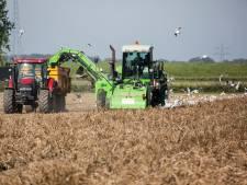 Akkers zijn te nat: boeren zitten met piepers in de maag