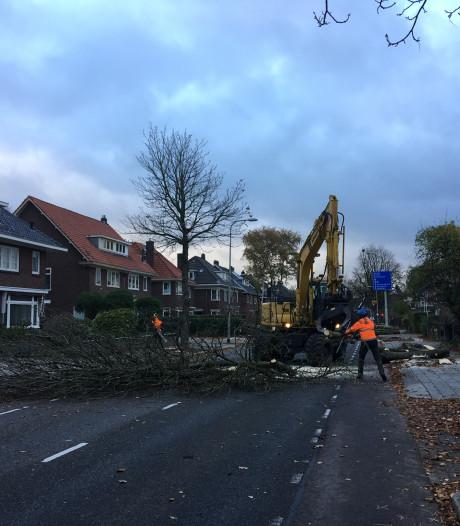 Brinkgreverweg  in Deventer 'op slot' door bomenkap