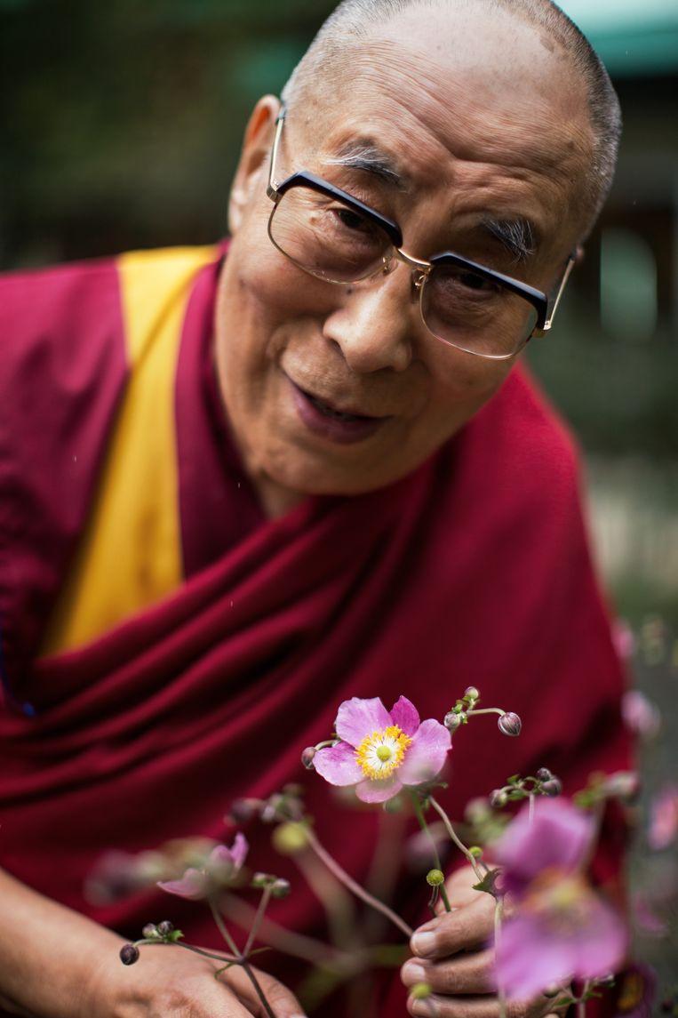 Portret van de 14de Dalai Lama, Tenzin Gyatso. Foto is genomen in het klooster waar de Dalai Lama al bijna 60 jaar leeft. Beeld null