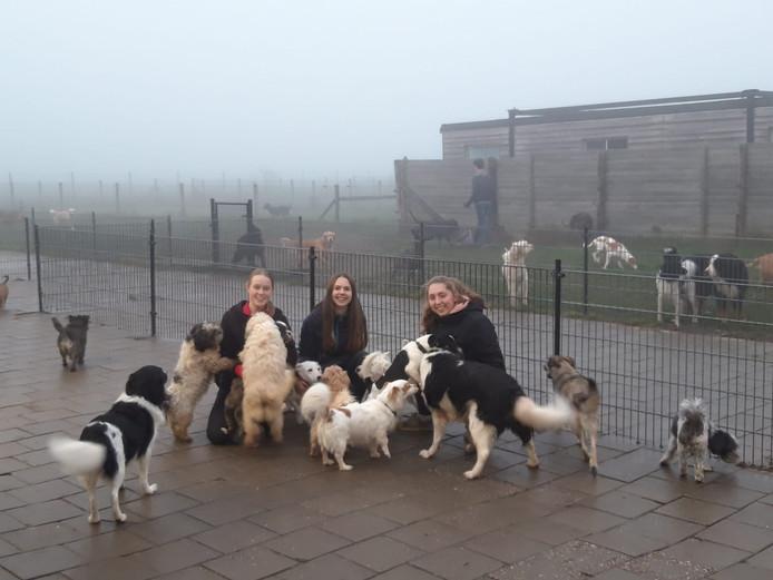 De 'gevluchte' honden krijgen alle aandacht van hun verzorgers op oudjaarsdag.