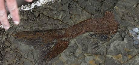 Unieke vondst: Fossielen tonen de meteorieteninslag die dino's deed uitsterven