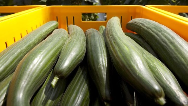 Onschuldige komkommers. Beeld anp