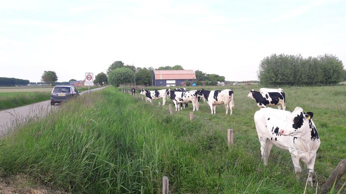 Bewoners maken zich zorgen om toegenomen sluipverkeer over de lange, smalle Lange Betteweg bij Biervliet.