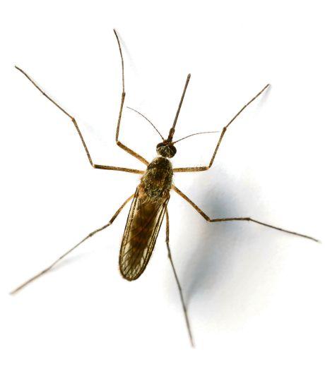 Muggenoverlast piekt vroeg: onderzoek naar overdragen infectieziekten