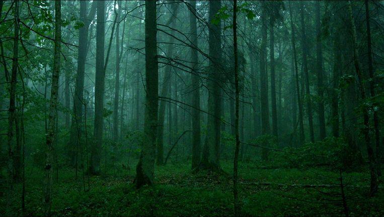 Mindaugas Survila filmde voor zijn documentaire The Ancient Woods niet op één plek in Litouwen, maar overal waar nog oerbos is Beeld -