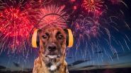 Avondfeest wordt afgesloten met diervriendelijk vuurwerk