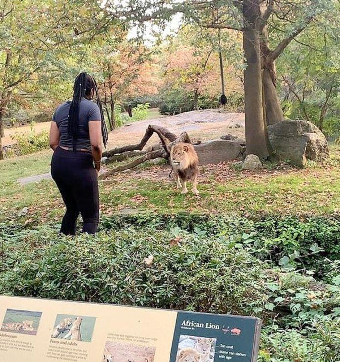 De vrouw treiterde de leeuw.