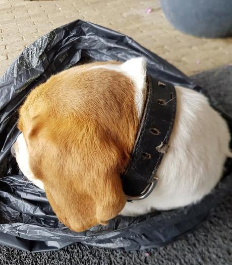 Waar kwam deze dode beagle vandaan? Politie gunt baasje waardig afscheid