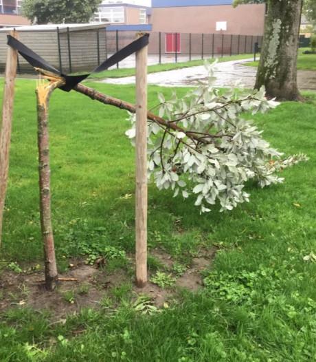 Aangifte na vernieling 22 gezonde bomen in Zuid-Beijerland