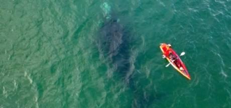 Deux kayakistes vivent un moment inoubliable avec une baleine