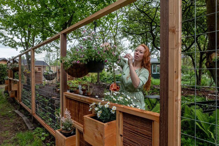 Een 'groenschutting' op de Amsterdamse volkstuin van Wendy Grin: een tuinscherm van natuurlijke materialen. Beeld Patrick Post