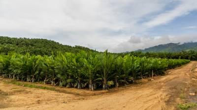 Moeten we nog wel chocopasta met palmolie eten?