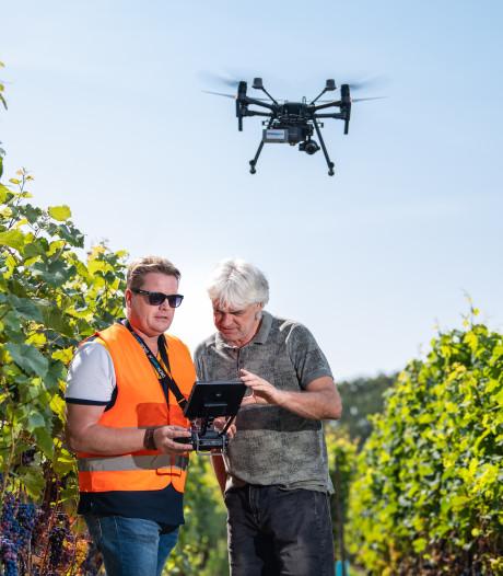 UT helpt met drone bij maken van duurzame wijn uit Hof van Twente