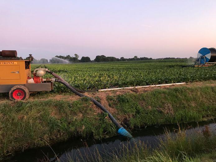 Boeren in het gebied van het Waterschap Limburg mogen nog maar beperkt slootwater gebruiken.