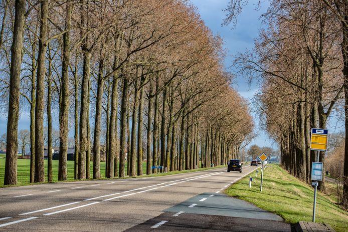 Meer dan tweehonderd bomen langs de Frieseweg moeten het veld ruimen omdat ze te oud zijn geworden.