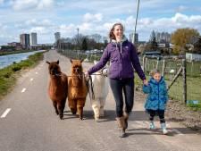 Iedereen houdt van Ted, Joop en Guus: vanuit de hoogvlakten in Peru naar een voortuin in Nieuwerkerk