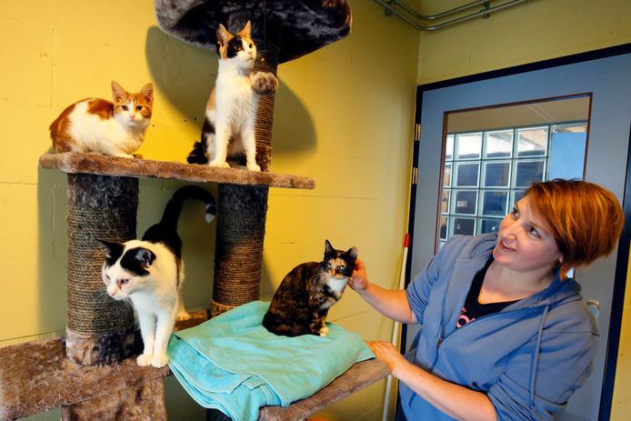 Een deel van de katten, hier met medewerkster Sabrina van het dierenasiel in Gorinchem. Daar worden 17 van de 44 katten nu tijdelijk opgevangen. De rest zit in Nieuw-Lekkerland en Deil.