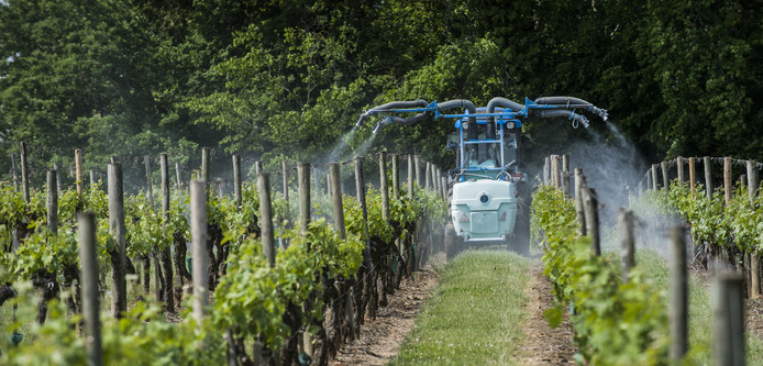 Het pesticidengebruik in de wijnindustrie ontmoet steeds meer weerstand.
