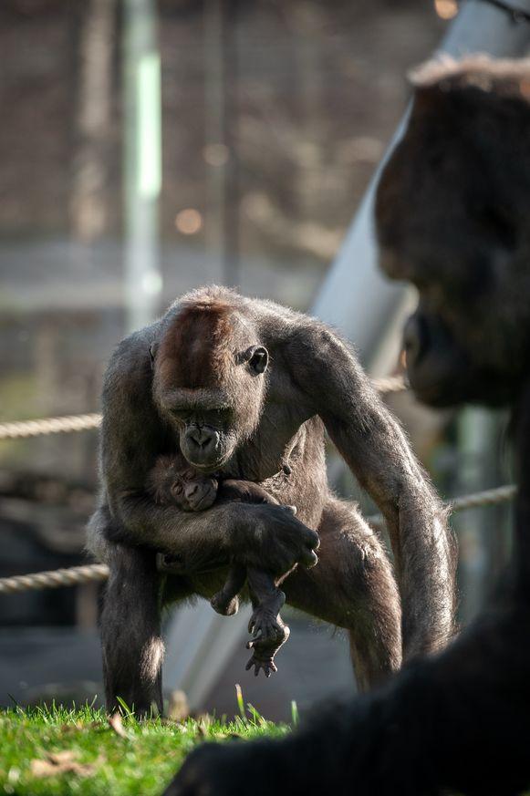 De kleine Thandie klampt zich graag vast aan haar moeder