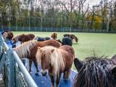 Nieuwsoverzicht | Verdachte gruwelijke brandmoord hoort 20 jaar cel en tbs eisen - Wat doen dertien pony's op een hockeyveld?