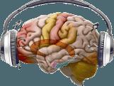Dit is wat muziek met ons brein doet