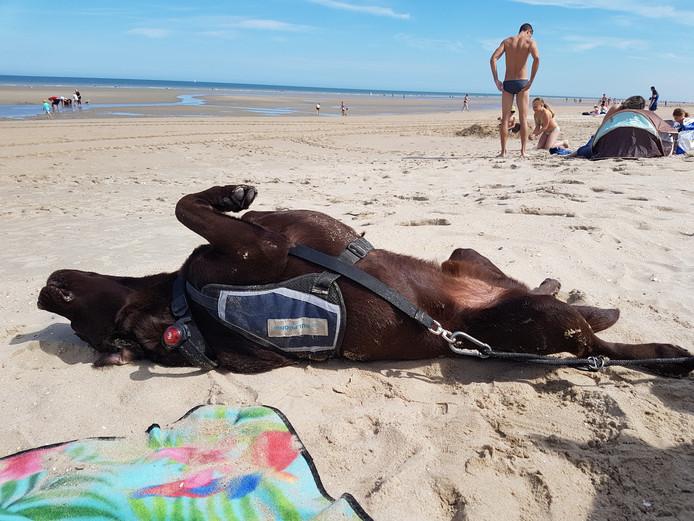Toen hulphond Gydo zijn baasje zag genieten in de zon, dacht hij: ik kan ook wel even in de relaxstand.