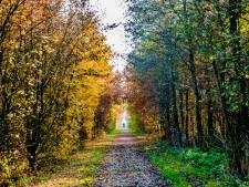 Laatste 19.000 bomen Bentwoud worden deze maand  geplant