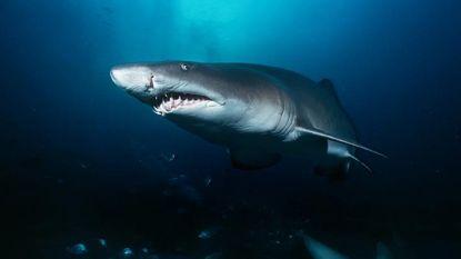 Hand en onderarm in buik van haai gevonden op La Réunion: slachtoffer is waarschijnlijk vermiste Schotse toerist