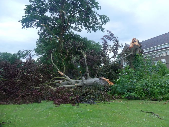 In de voortuin van het St. Jozeklooster aan de St. Jozeflaan is deze monumentale boom geknakt.
