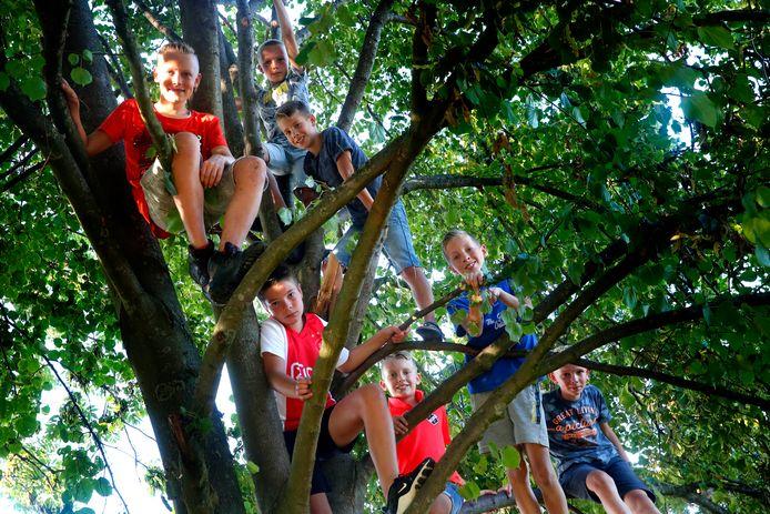 Een grote groep jongens uit Schoonrewoerd bouwde in een lindeboom een enorme boomhut. Maar het werd te gevaarlijk, oordeelde de gemeente die besloot dat hij weg moest.