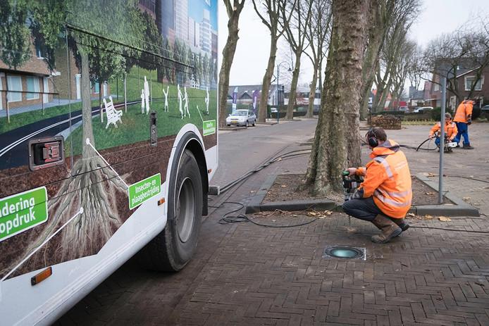 In de Dorpstraat in Gendt wordt een eind gemaakt aan wortelopdruk door platanen door ze meer ruimte te geven.