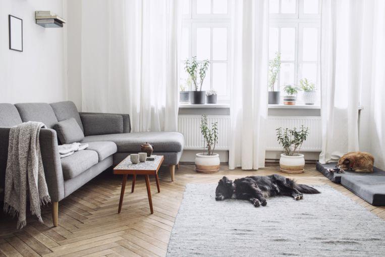 Oude Houten Vloeren : Een oude vloer recupereren? zo pak je het aan woon. hln