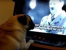 Schot verandert hond in 'nazi' en moet voor de rechter verschijnen