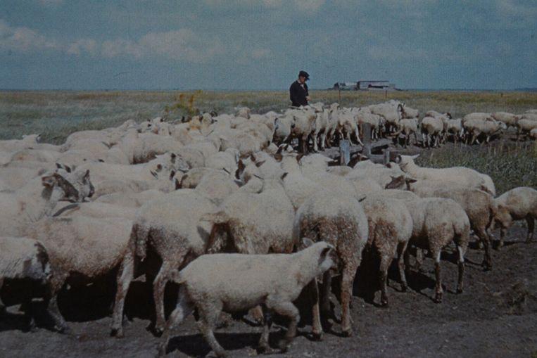 Elke dag opnieuw moesten de schapen geteld worden.