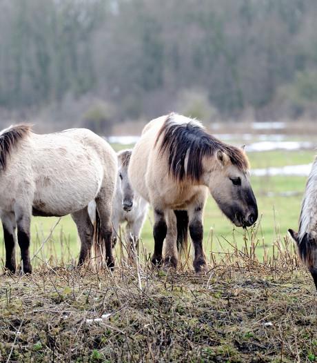 Gemeente: 'Hef belasting op paarden om poep op te ruimen'
