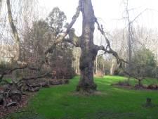 Geldrop heeft mooie plannen voor kasteelpark, fietstunnels en een A67-viaduct