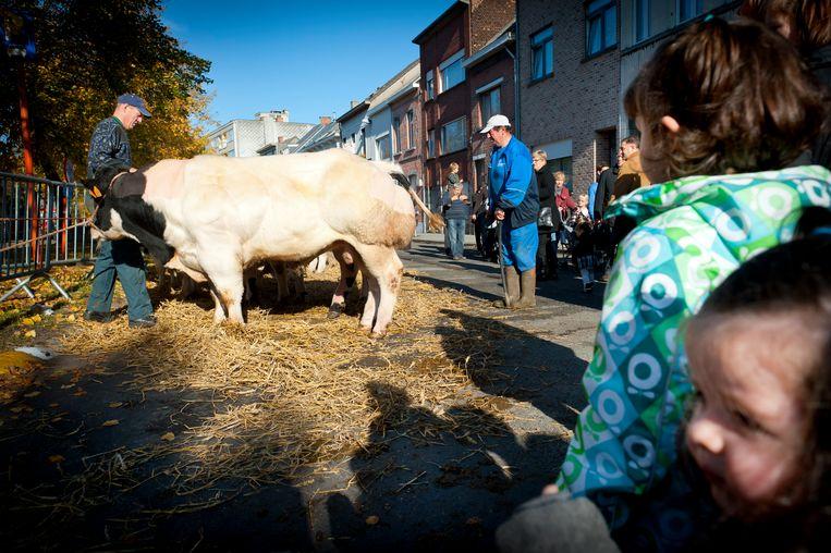 De veeprijskampen zijn al jaren een vast onderdeel van Willebroek Jaarmarkt.