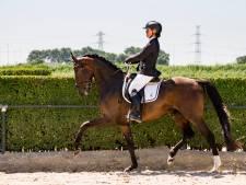 Paard Isa (6) wint prijs na prijs bij dressuurwedstrijd. Een dag later is ze dood