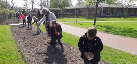 Oldenzaalse kinderen zijn gek met bijen