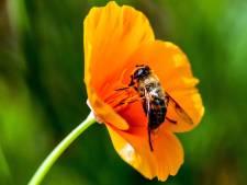 Bijenhouders positief: meer bijenvolken hebben de winter overleefd