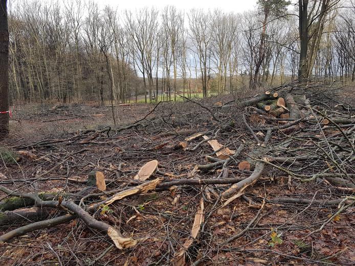Het bos van Warnsborn achter de Karmelitessenlaan in Arnhem na de kap op last van landgoedbeheerder Geldersch Landschap & Kasteelen (GLK)